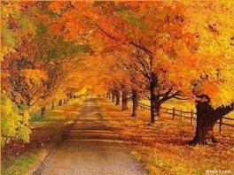 Autumn scene 056 1024x768