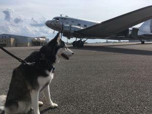 Cajun Airlift: Harvey Relief