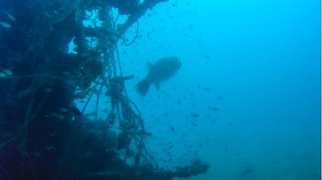 vietnamese wreck
