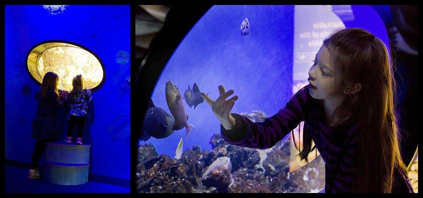Aquarium at Discovery Place