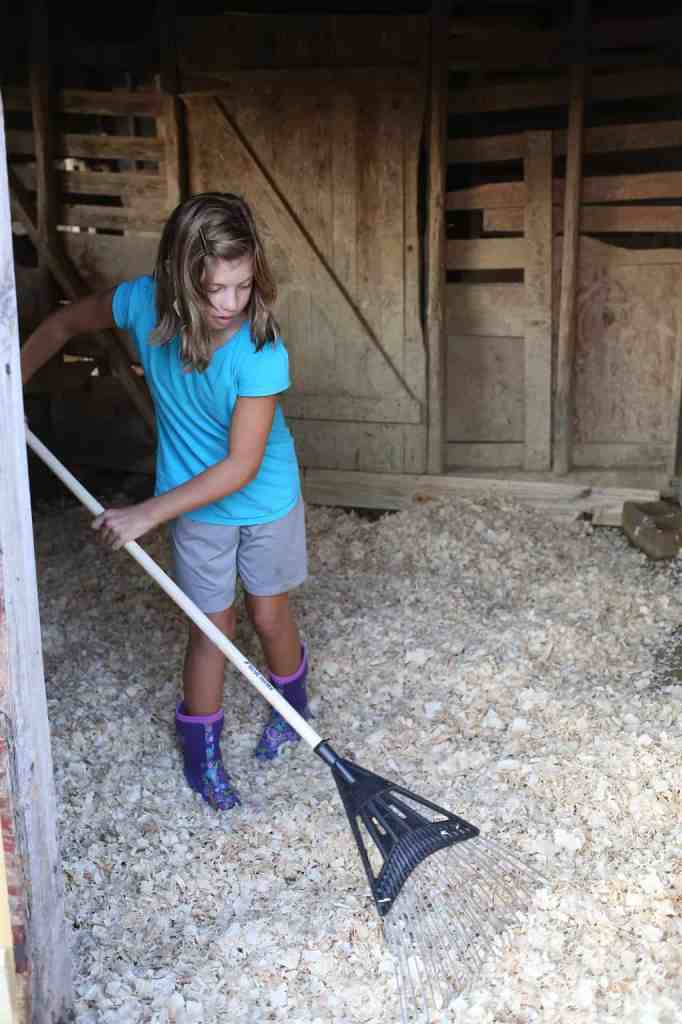 Fixing the barn for Clover the piglet
