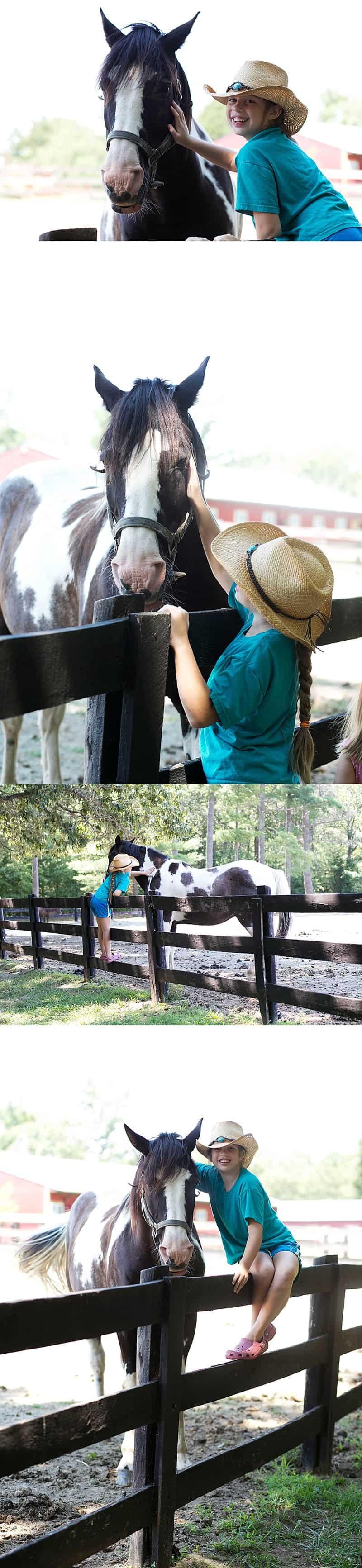 Rebekah's horses in Charlottesville