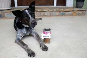 DIY 'Thanks for the DOGGONE Good Time' Hostess Gift for Dogs