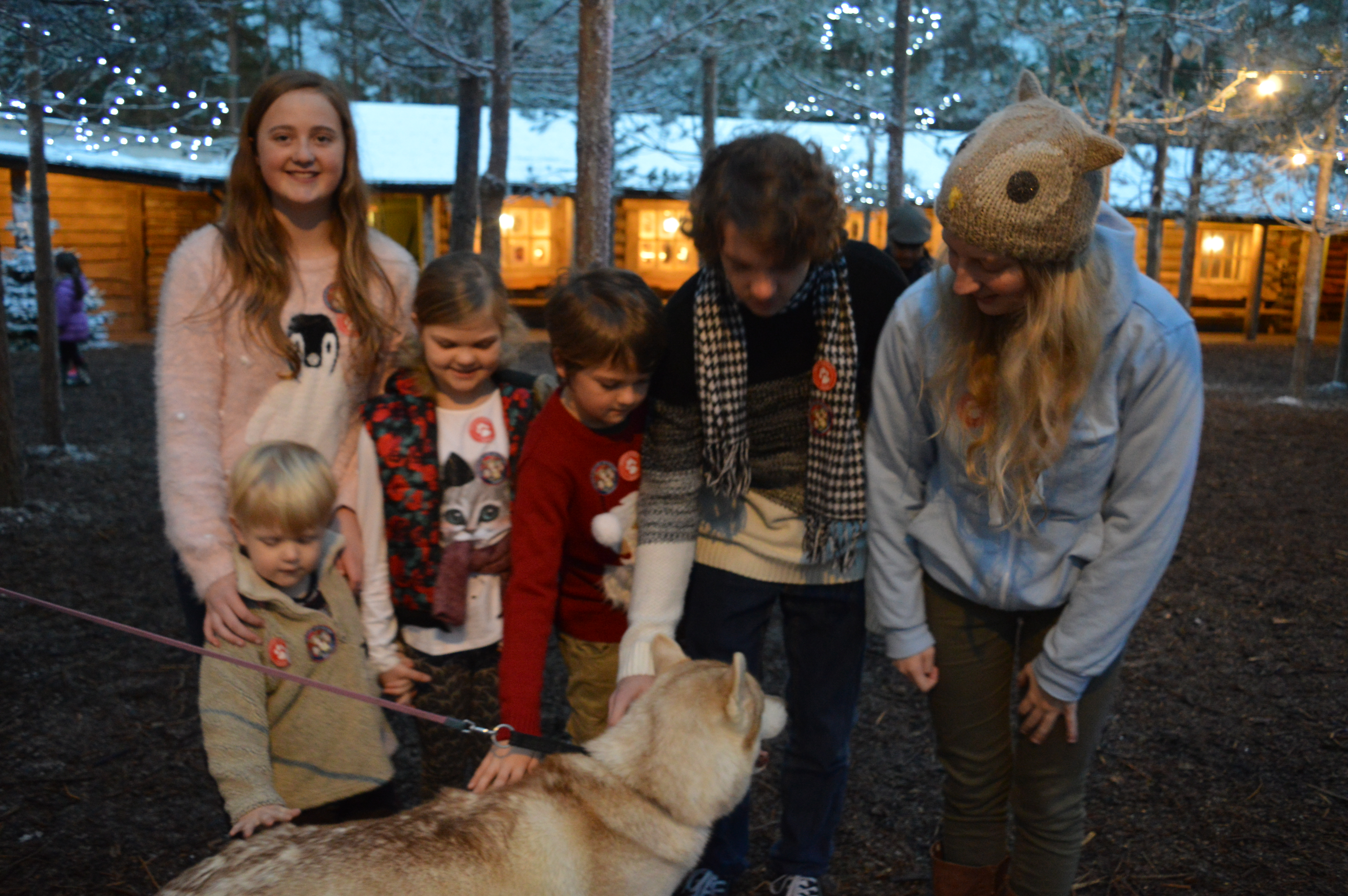 Children making friends with the Huskeys at Lapland UK