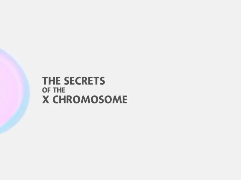 X ক্রোমোসোম এর রহস্য উন্মোচন