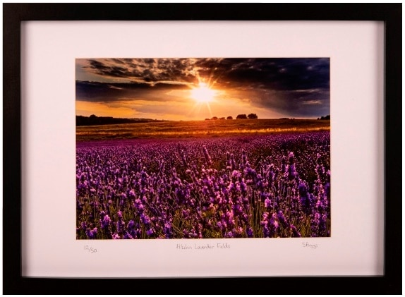 Hitchin Lavender Fields framed print by Steve Biggs