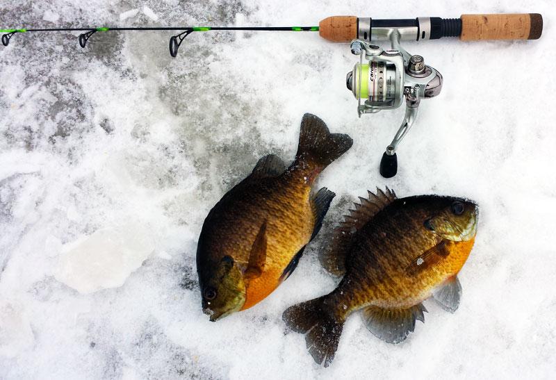 Ice fishing sunfish