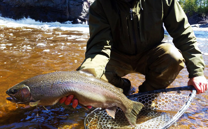 Fly Fishing Steelhead on North Shore of Lake Superior