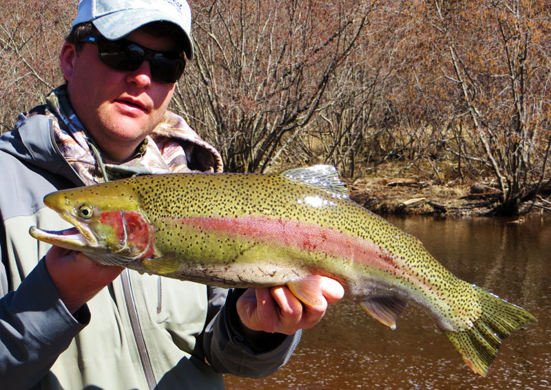 fly fishing rainbow trout lake superior tributary