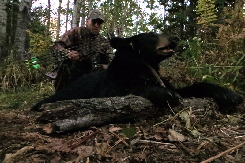 Bowhunting Bear in Minnesota