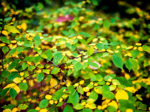 autumn leaves #südwestkirchhof copyright andreas reich 2013