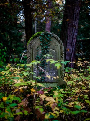 grave and ivy #südwestkirchhof copyright andreas reich 2013
