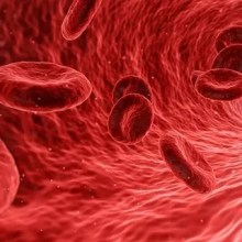 bloods cells in artery