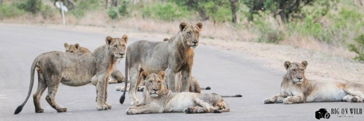 10 Tips for self-drive in kruger