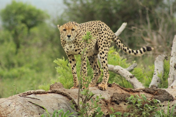 Our Best Roads in the Kruger National Park