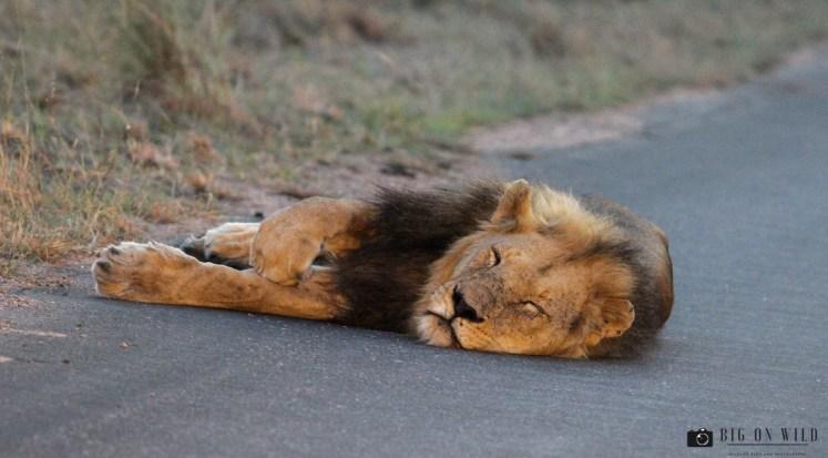The Best Season to Visit the Kruger National Park