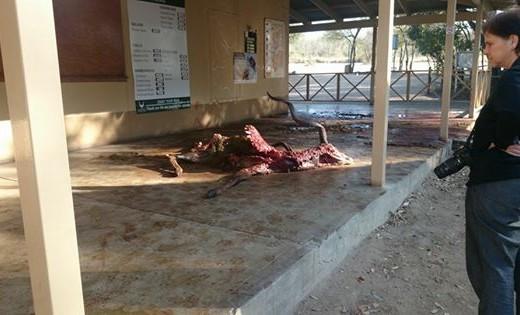 Hyena Kill at Luxury Camp Reception