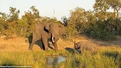 Elephant attacks rhino