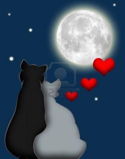 7607167-chats-de-dessin-anime-en-amour-sous-la-lune-et-les-etoiles