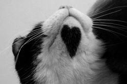 Gato-corazon-3