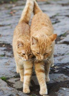Www.shortbizz-art...-Cat-Love