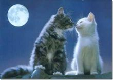 beso de gatos (3)_thumb