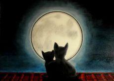 cats-love-valerio-fiocca