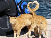 gato-corazon-12-500x374