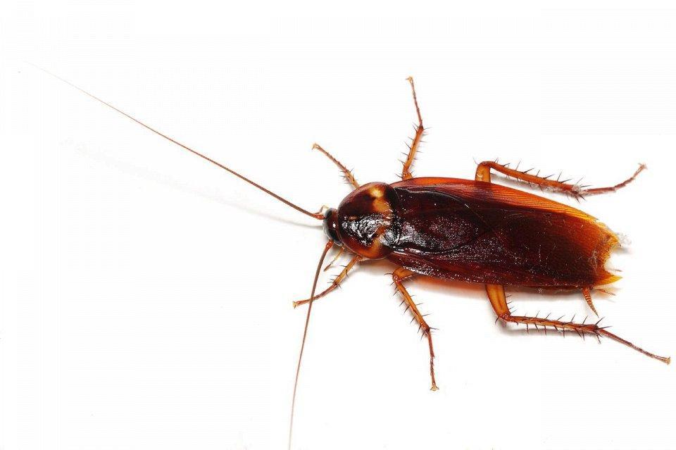 Укусы насекомых кто как кусает. Укусы насекомых: как определить, кто укусил? Помогают ли спиртовые растворы
