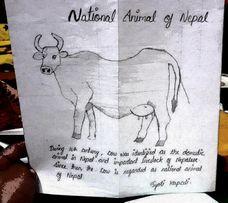 Jyoti Kapali | Age 18