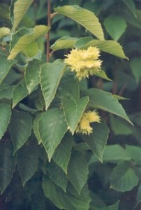 photo of tree in flower