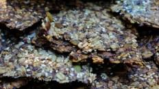 Savory Seed Crackers https://bigsislittledish.com/2016/08/04/tomato-eggplant-appetizer-with-sweet-moroccan-spices-savory-seed-crackers-vegan-and-gluten-free/