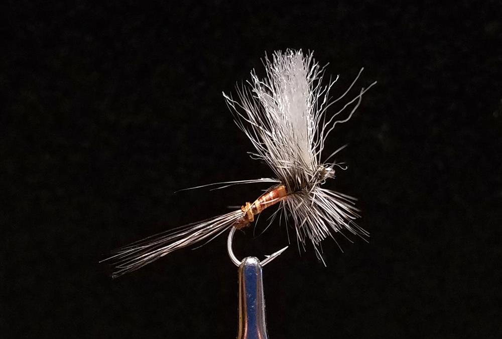 Big Sky Anglers Featured Fly – JoJo's Gray Drake