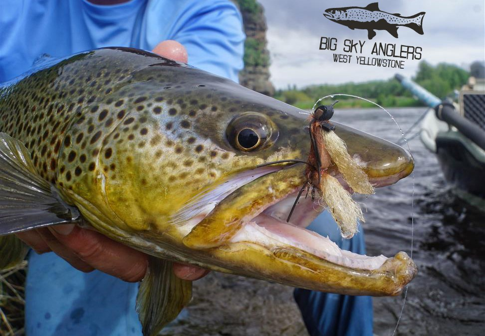 Big Sky Anglers Weekly Fishing Report – June 7, 2018