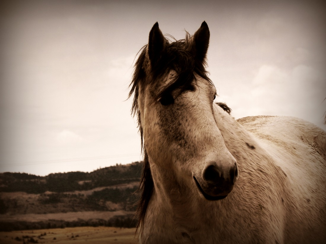 Rent or Buy a Horse - Big Sky Horse Leasing