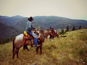 Rent Horses for Summer - Big Sky Horse Leasing