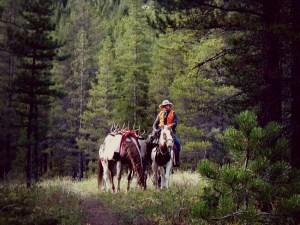 Fall Horse Leasing - Big Sky Horse Leasing
