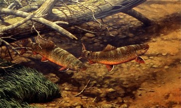 Brush Pile Brookies Illustration by Fred Thomas