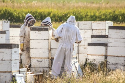 Andrew Jensen, Logan Smoot and Ron Richeson work to gather honey on a hillside overlooking Freezeout Lake. Their protective suits are duct taped at the wrists and ankles, assuring no exploratory bees venture too far.
