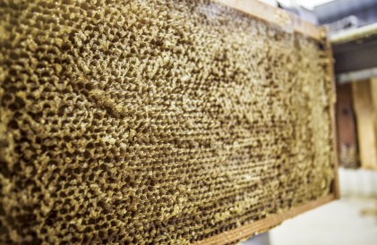 Once the honey is withdrawn, wholesome wax is left behind.