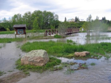 Natural flooding, so critical to the health of creeks and their associated floodplains, ceased when Brewery Flats was channelized. In recent years, spring floods have rejuvenated streamside vegetation and nearby wetlands, deepened pools, and washed si