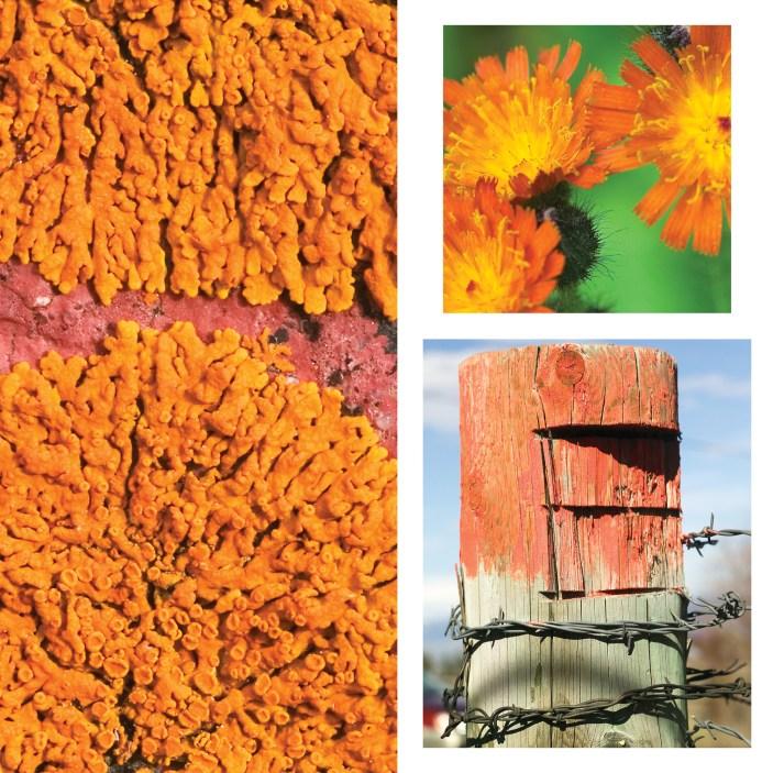 SPSU09_-Uniting-colors-orange_web.jpg