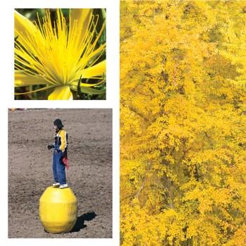 SPSU09_-Uniting-colors-yellow_web.jpg