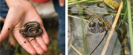 Snake in hand and frog found, Clearwater critters.