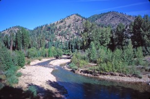 The South and West Fork of Fish Creek merge at FWP's Forks fishing access site, which offers camping under cool pines that survived the Big Burn. Photo by Jeff Erickson