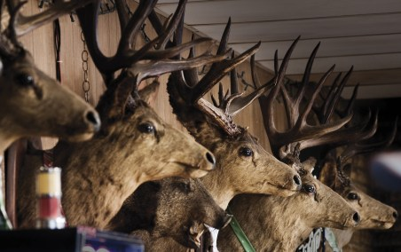 Impressive trophy mule deer line the walls of The Mint in Whitehall. All of these bucks were shot in just a few years at the end of WWII when men returned with ammunition to find deer populations which had not been hunted for years. Photo by Tony Demin