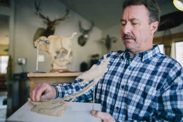 """Bozeman sculptor Ott Jones works in his studio on a maquette of a brown trout. """"I'm trying to tell a story,"""" the artist says."""