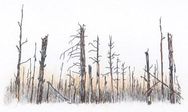 burnt-forest_web.jpg