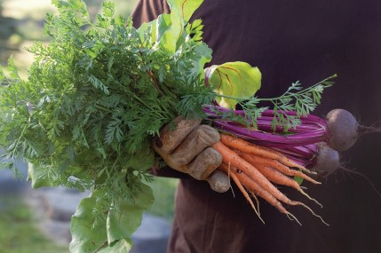 Onions, beets, carrots, zucchini and raspberries are all grown on the MT Pockets Ranch in the summer and incorporated into the seasonal menu at the restaurant.
