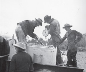 Weighing fish to transfer from truck to pack in July 1941. Taken at Many Glacier horse corral — fish heading to Cracker Lake. | Photo Courtesy of Glacier National Park archives
